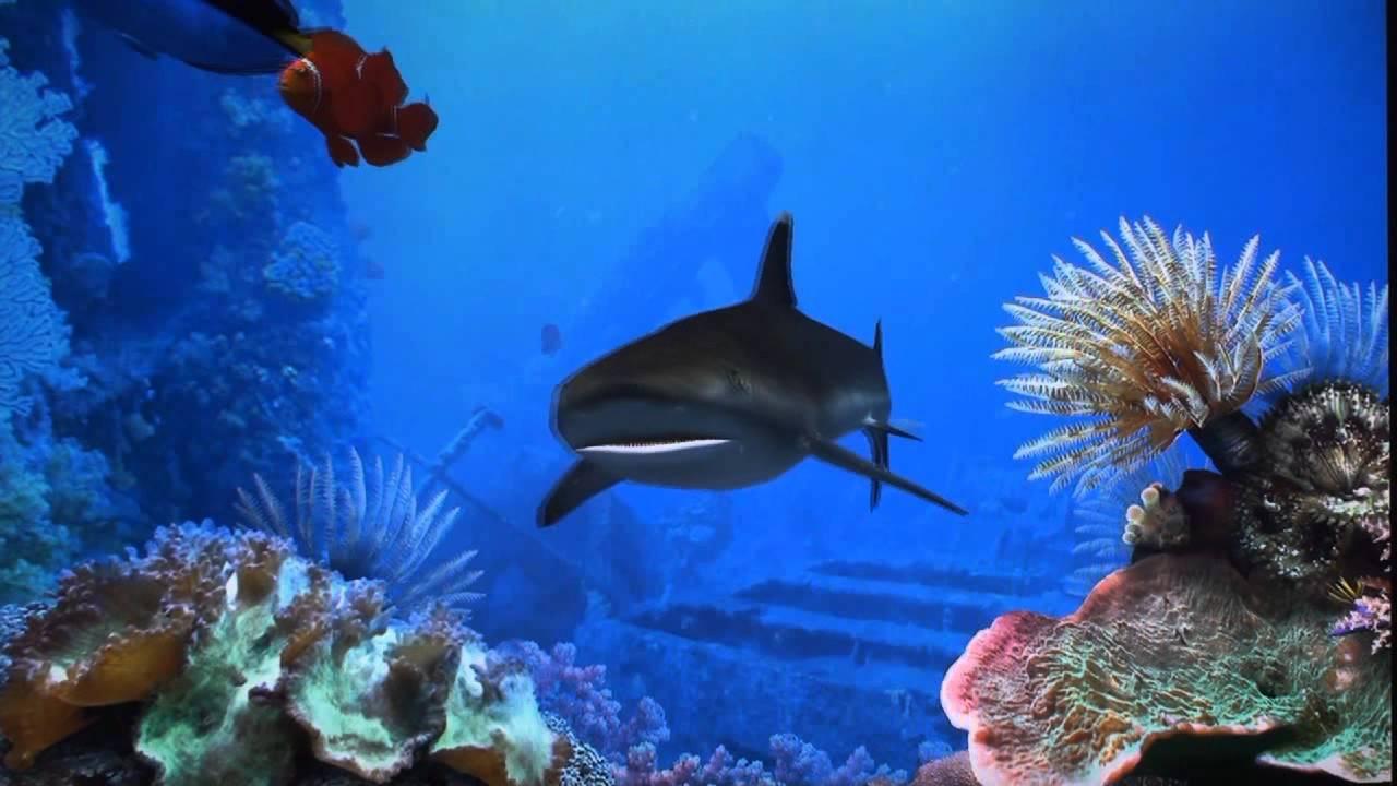 Fish aquarium screensaver - Fish Aquarium Screensaver