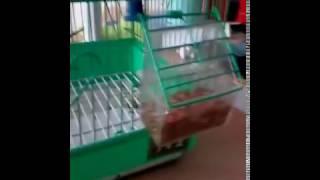 Я купил попугая!(, 2016-11-06T11:13:56.000Z)