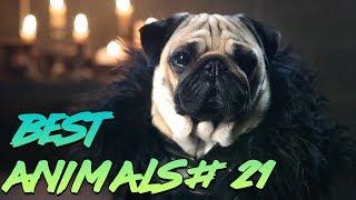 Best Animals Coub 21  Лучшие кубы с животными №21 Май 2019