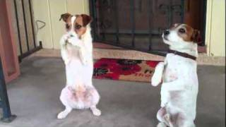 Uggie and Dash