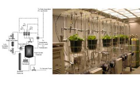 The Biology of Growing Plants Under Low Pressure (Hypobaric) Systems for NASA