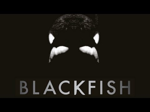 BLACKFISH - Killer Whales at SeaWorld Documentary Maker Gabriela Cowperthwaite Travel Video