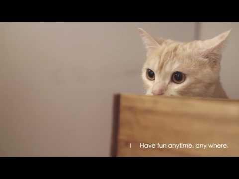Kočička krev hermafrodit na youporn.