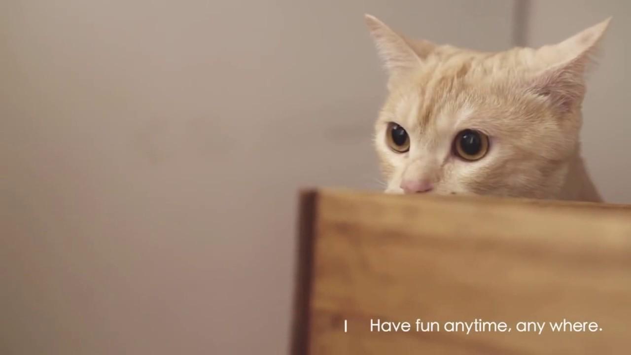 Čo robí mačička tesný