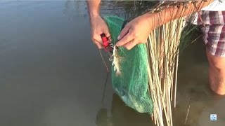 Fishing - Fishing for wild ponds - Fish fishing