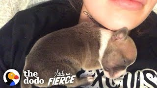 1-Day-Old Puppy Grows Up To Have The CRAZIEST Ears | The Dodo Little But Fierce thumbnail