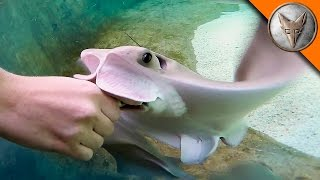 Stingray Feeding Time!