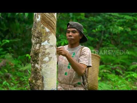 INDONESIAKU | HEGAR MANAH HARAPAN PARA TRANSMIGRAN  (12/11/18) PART 2