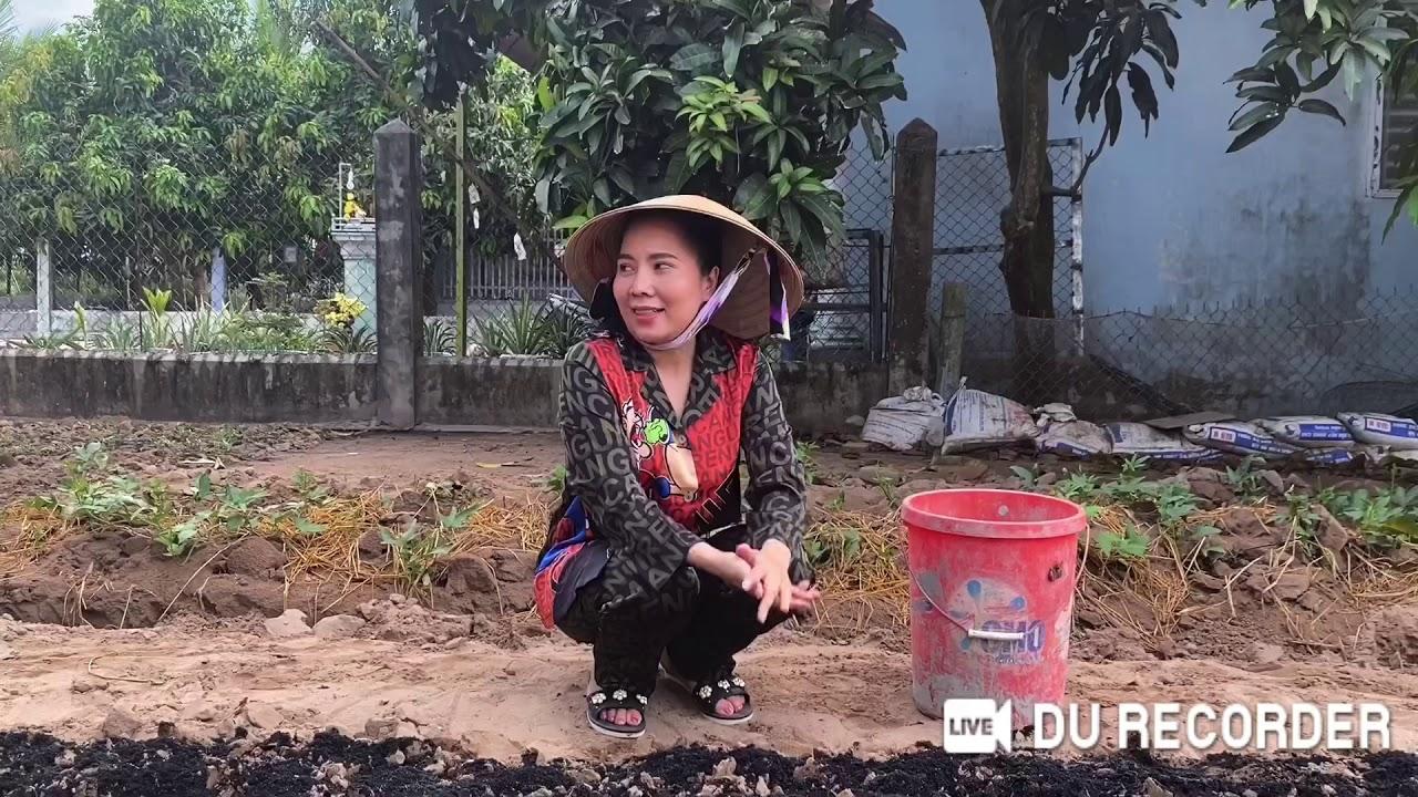 NSUT Thu Vân tự trồng rau sạch tại nhà trong mùa dịch