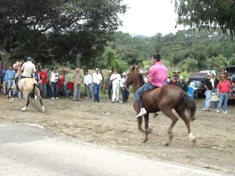 carreras de caballos 1/4 de milla. El Jazmin.
