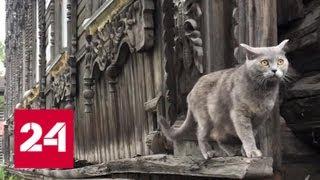 Командная экономика. Специальный репортаж Екатерины Сандерс - Россия 24