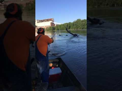 Cat fishing on the wabash river