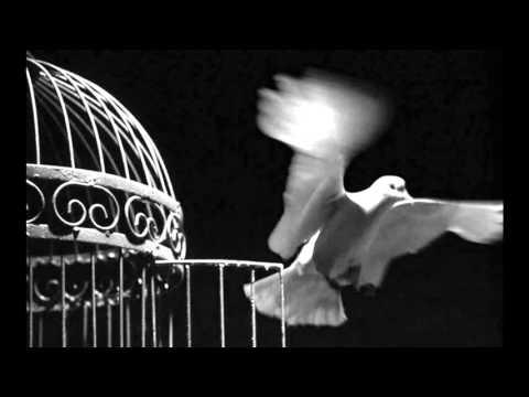 Клип Iggy Pop - Syracuse