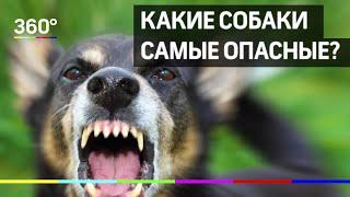 Какие собаки самые опасные? Список пород утвердило правительство