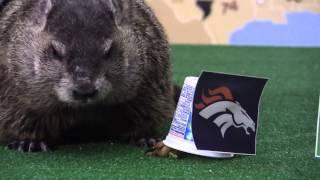 Super Bowl Groundhog Day Prediction