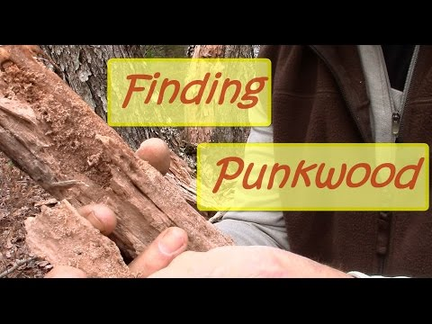Quick Tip - Finding Punkwood