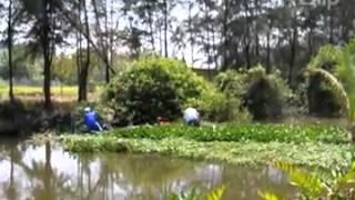 Phát hiện xác chết trôi sông   Clip vn