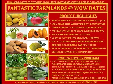 Synergy;s Virtual Property Visit (VPV) -Tranquil Farms - Farmlands with Fruit Plantations