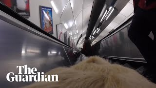 A camera attached to Kika the guide dog captures the moment her own...