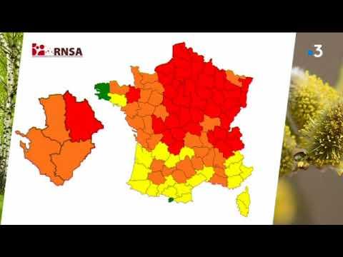 Allergies : alerte rouge pour les pollens de bouleau dans la Vienne