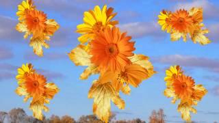 Красивая осень Осенние эффекты и переходы