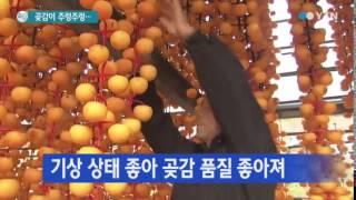 달콤하고 쫄깃한 곶감 만들기 분주 / YTN
