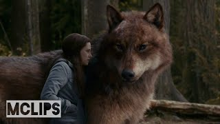 The Twilight Saga: Eclipse (2010) - Vampires Are Telling The Wolf - HD - Movies Clips (0.2)