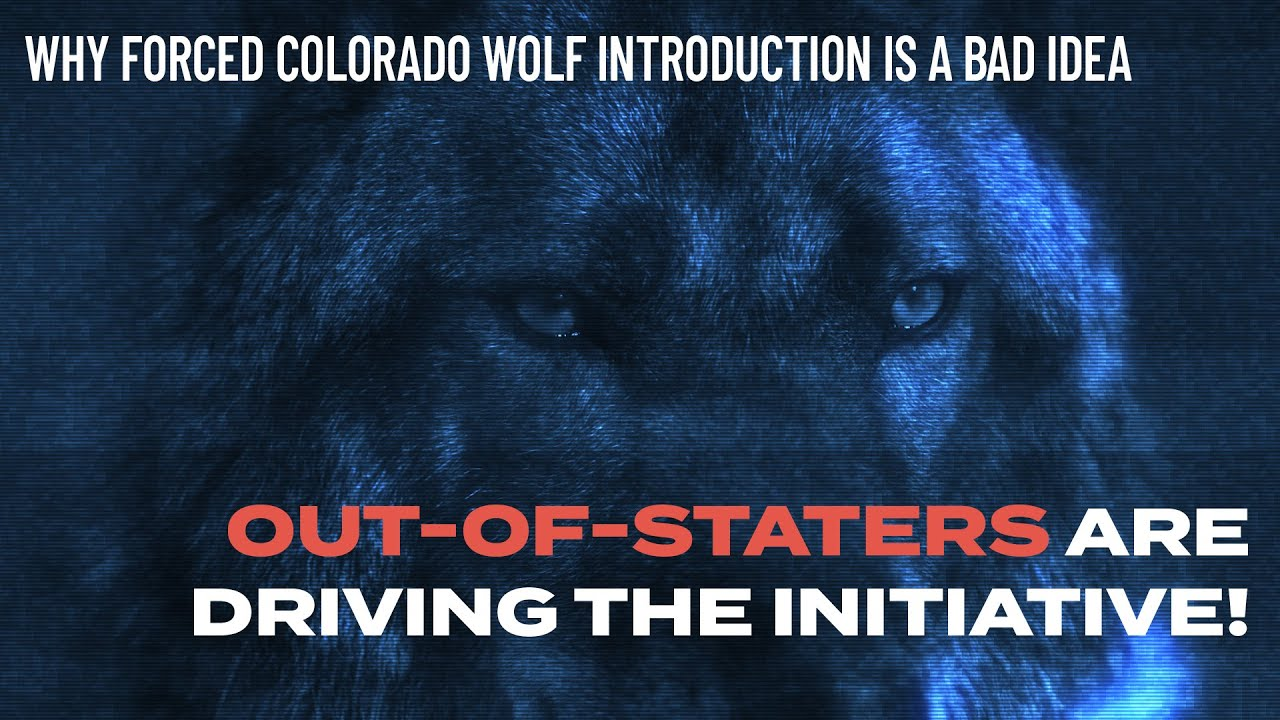 Out-of-staters driving Colorado Wolf ballot initiative!