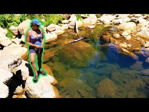 Fly Fishing Canyon Creek! (TINY POOL LOADED With BIG FISH!)