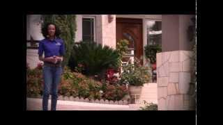 Jamaica Homes