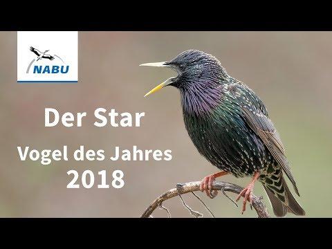 Der Star Ist Vogel Des Jahres 2018 Nabu
