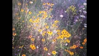 #flower #pretty #garden