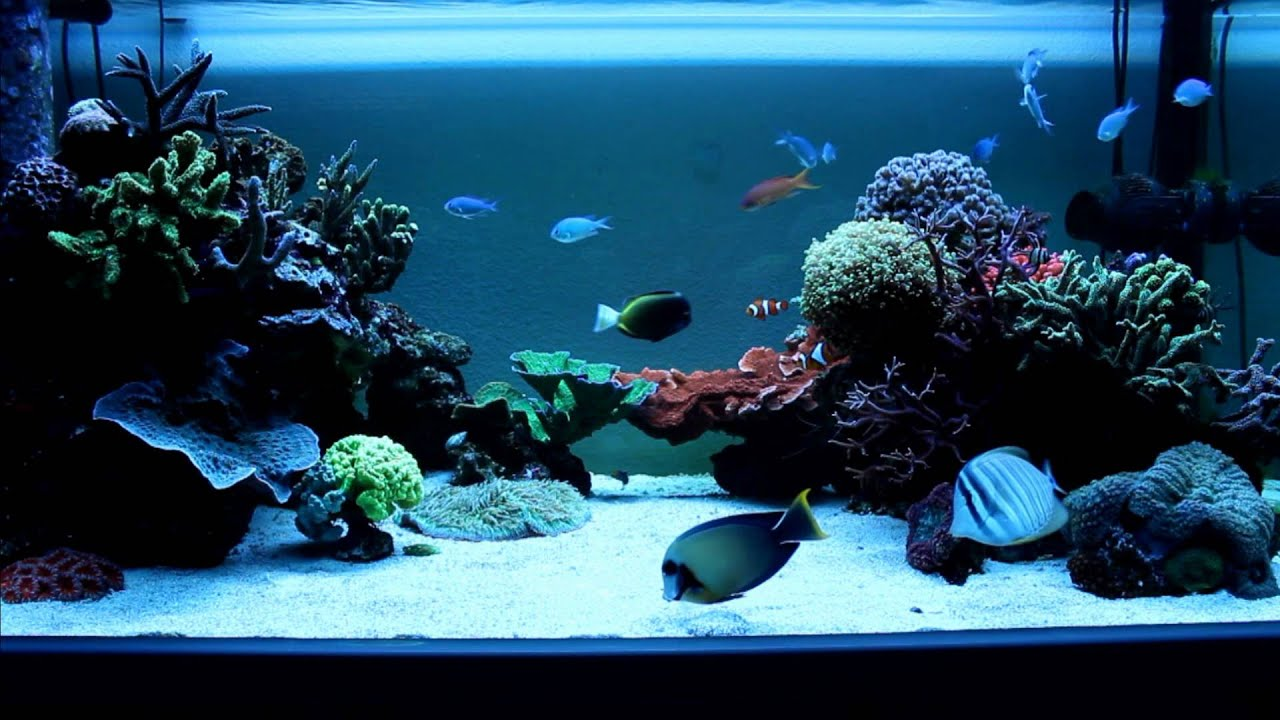 Aquarium recifal 600l youtube for Aquarium 600l