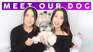 Meet Our Dog! Dog Tag! | The Caleon Twins