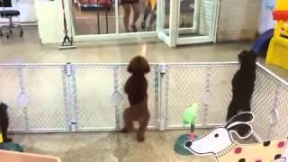 Собака танцует лучше  чем я
