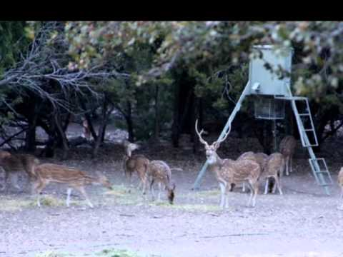 270 Ac Hunting Ranch In Junction Texas Contact Louis