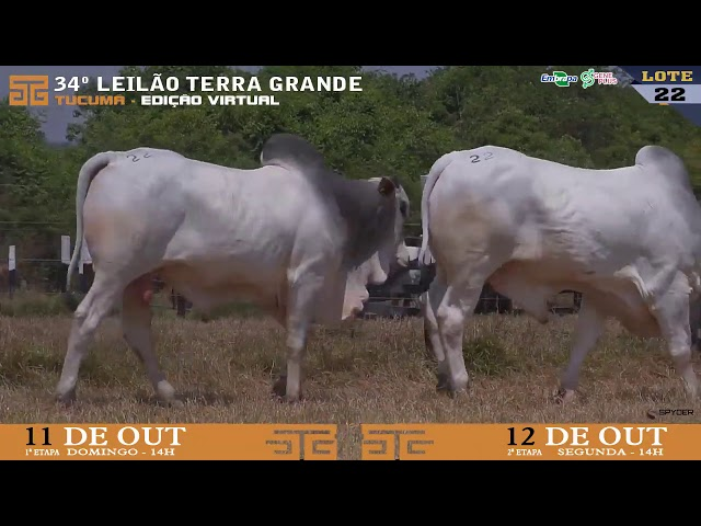 LOTE 022