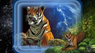 Исчезающие виды животных /Proshow producer