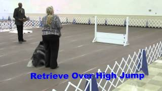 Akc Dog Obedience Open Trial Blooper - Clancy The Keeshond