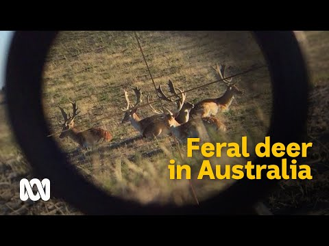 The Complex Conundrum Of Wild Deer In Australia 🦌 | Meet The Ferals Ep 3 | ABC Australia