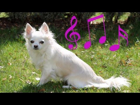 Chlupatá písnička - Herkules si zpívá song vlka zahradního