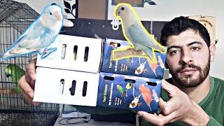 اشتريت طيور روز وفيشر جديدة 🤩 + تفقد أعشاش الطيور داخل غرفة التربية