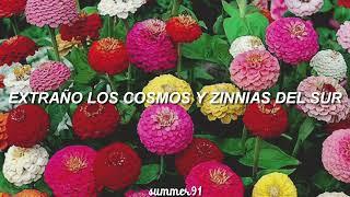 Clairo - Zinnias // Traducida al Español