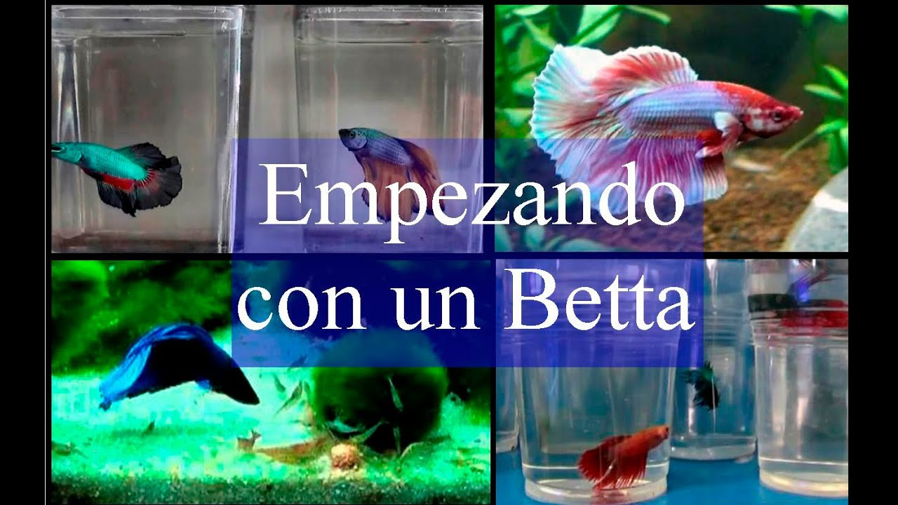 Acuario empezando con un betta doovi for Red para peces de acuario