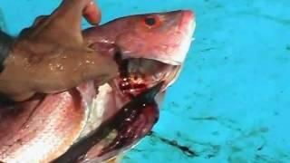 Fish gutting