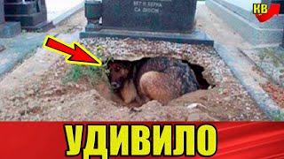 Все думали, что собака скорбит по своему хозяину, но то что они увидели, поразило.