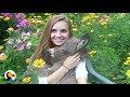 Baby Donkey Naps in Girl's Lap | The Dodo