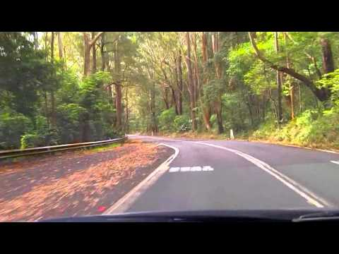 Sydney's Best Driving Roads - Royal National Park