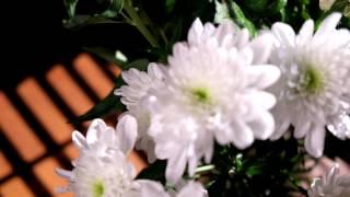 Тестовое видео с Fujifilm X-E2