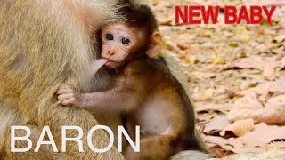 #MONKEY# POWER ANIMALS# BARON IS A VERY CUTE BABY. HE IS GROWING FSTER AND SO SMART.
